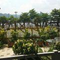 天宇海  靚裝地下花園相連,,特高13呎9 樓底 - J885707 - 保泰街18號