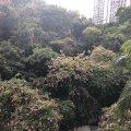 沙田 富豪花園 景峰閣 - N762219 - 大涌橋路52號