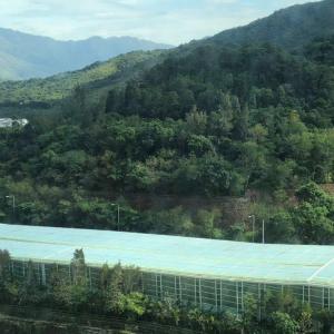 馬鞍山 翠擁華庭 高層翠綠山景