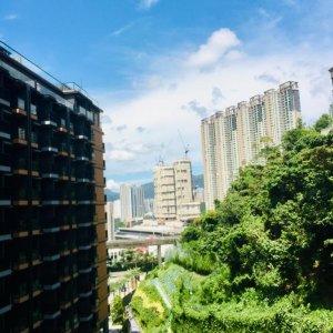 薈蕎  ~~ 翠綠開揚 ~~ 東南景